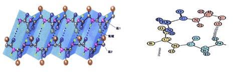 组成蛋白质的氨基酸在分子结构上的主要区别是( )a.羧基的数目不同b.图片